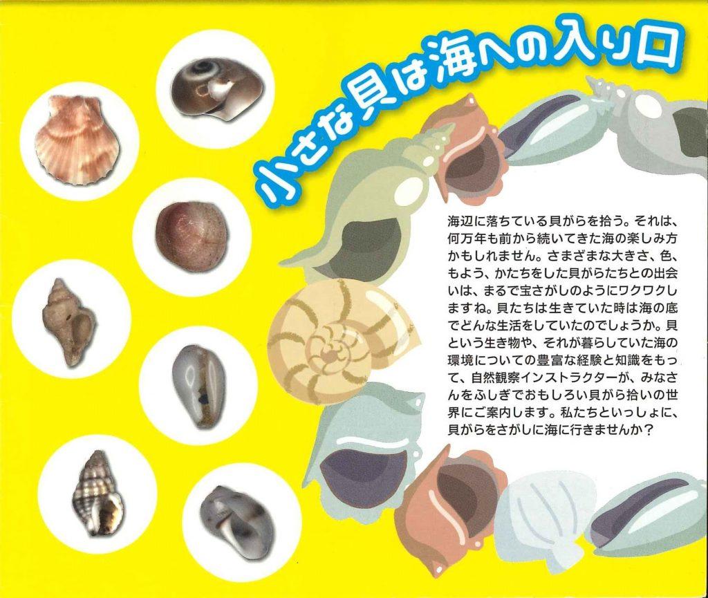 貝殻の世界