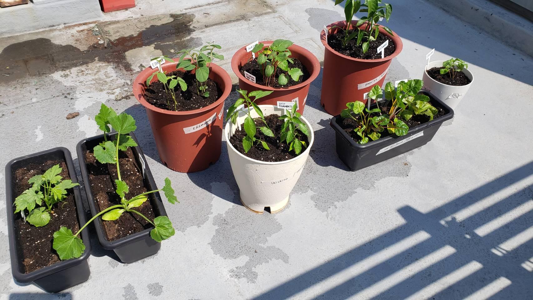 0513菜園9