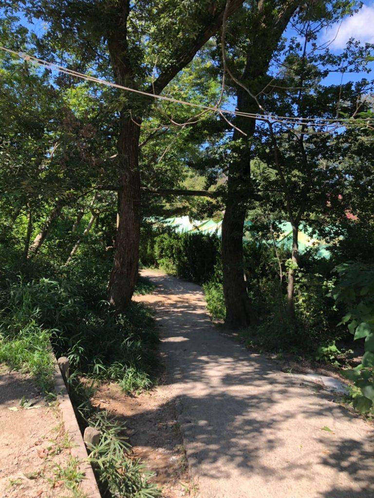 公園周辺の自然
